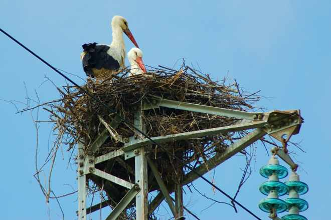 Bird's nest built on power lines